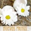 Un nuevo libro de Francisco Ponce