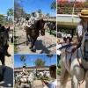 """Caballos en la """"Feria de Abril"""" de Valencia – El Ventanuco"""