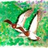 Día de las aves, acoge una nueva edición – El Ventanuco