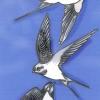 Las aves migratorias – El Ventanuco