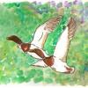 Día Mundial de las Aves Migratorias – La Columna