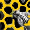 """La dulce """"dulzura"""" de la miel – El Ventanuco"""