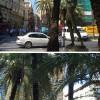 Palomas de la Paz en la calle de la Paz de Valencia – El Ventanuco