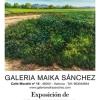 Galería Maika Sánchez (Valencia)-Francesc Vidal – El Ventanuco