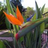 Flores en el jardín de cosecha propia – ¡Cosa fina! Magazine