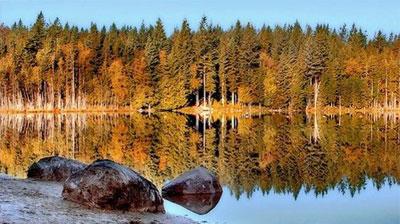 Bosque en el lago