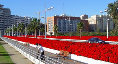 Puente en invierno con Poinsettia