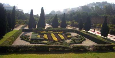 Plantas formando el escudo de Valencia