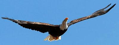 El Aguila guardian