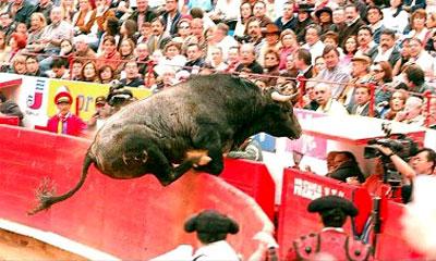 El toro 'Pajarito' coge mayor impulso apoyandose con los cuartos traseros en la barrera