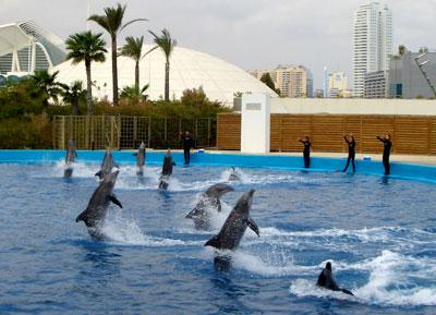 Delfines saludando