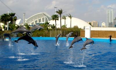 Delfines actuando