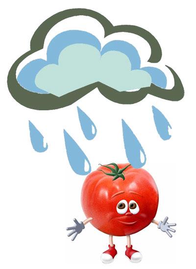 Pichin bajo la lluvia
