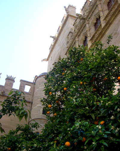 Patio de naranjos de la Lonja