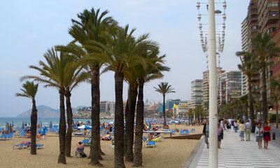 Palmeras en la playa de Benidor