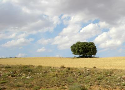 Cielo sobre el árbol