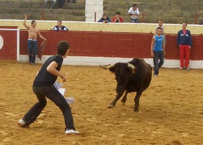 Citando al toro
