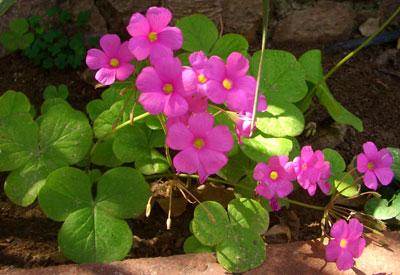 Flores caseras