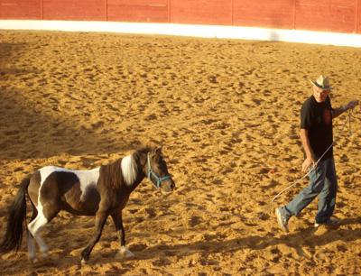 Sorteo de un Pony