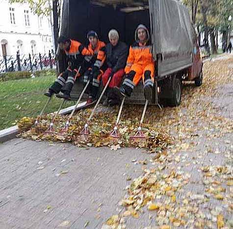 Caída de hojas recogidas
