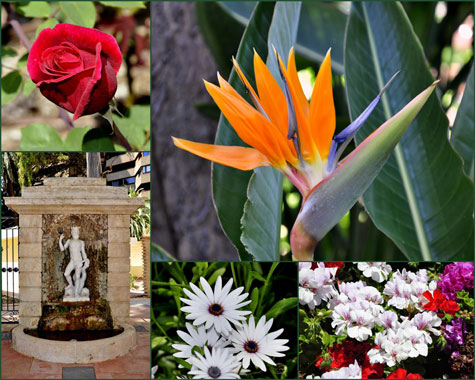 Plantas Jardines de Monforte de Valencia
