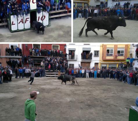 Desencajonamiento de los toros (Castellnovo)