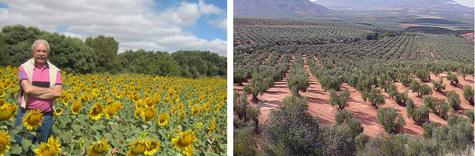 Cultivos extensivos de Andalucía
