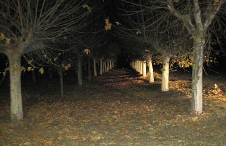 Árboles desnudos de hojas