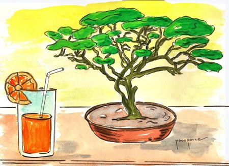 Para los pequeños, pequeños árboles