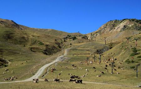 Valle de CERLER con ganados