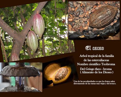 """Árbol, simiente y elaboración """"cacao-chocolate"""""""
