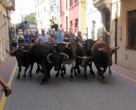 Entrada de toros en Castellnovo