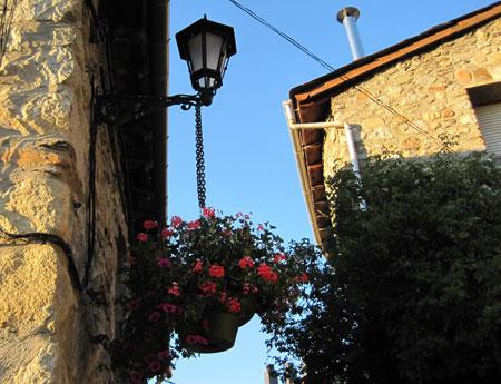 Flores en Cerler (Huesca)