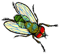 dibujo mosca