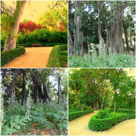 Jardines de ayora valencia francisco ponce carrasco for Jardin de ayora