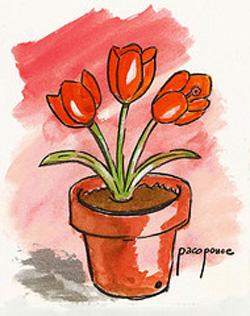 maceta de tulipanes