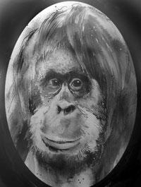 mono-blanco-y-negro