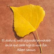 caida de hojas