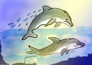 delfines en libertad