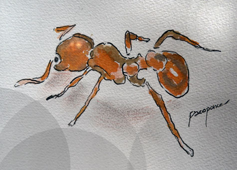 Hormiga común