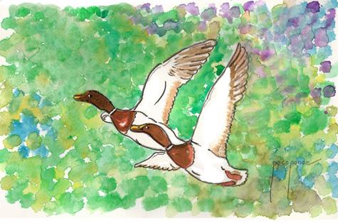 Patos - Acuarela de pacoponce