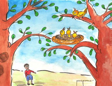 Nido - Troncos y ramas
