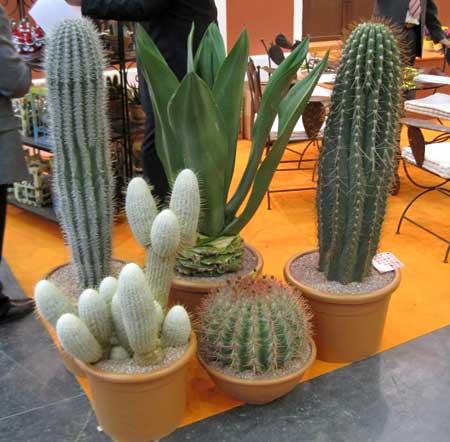 Iberflora 2009 mediterr nea de cactus francisco ponce for Cactus variedades