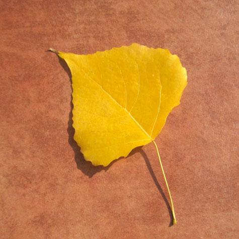 Hoja dorada de otoño