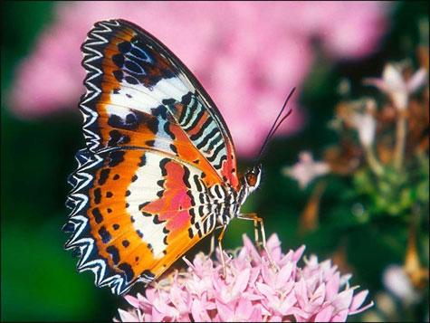 Mariposa de lindos colores