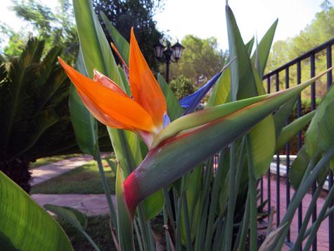 Flor (Ave del paraíso)